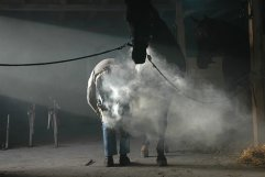 horse-2059504__340